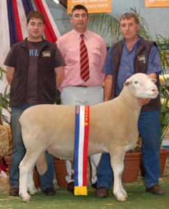 BUNDARA DOWNS 086028: Well muscled and balanced ram with excellent ASBVs to match carcase. Senior Champion Ram Adelaide 2009.