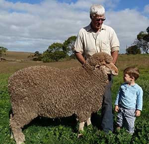 Poll Merino Recent Sire for Yanta: ORRIE COWIE 7578