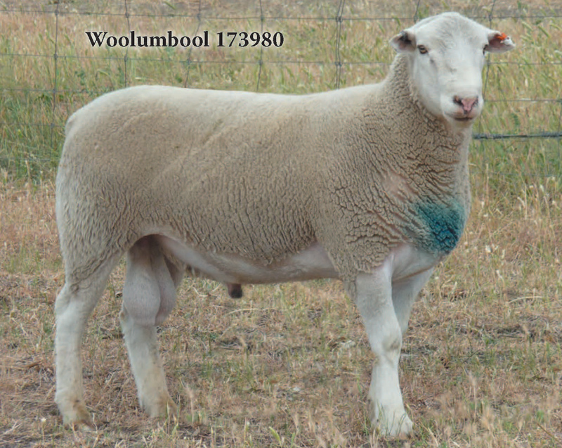 Woolumbool-173980