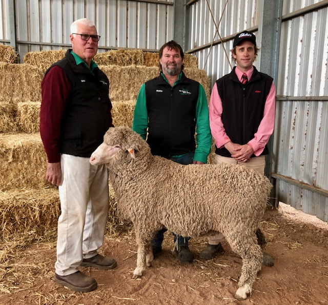 IMG_6592 Top price Poll Merino ram 2019 sale